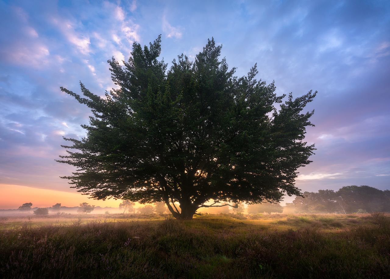 August take-off - The Punky Tree
