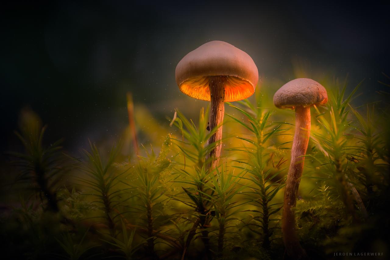 Mystic Mushrooms #3