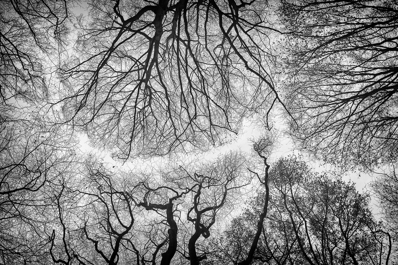 Treetops from under